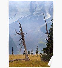 Emmons Glacier behind a dead Subalpine Fir on Mount Rainier Poster