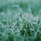 Morning Frost by Paul Finnegan