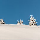 White and blue by Marcel Ilie