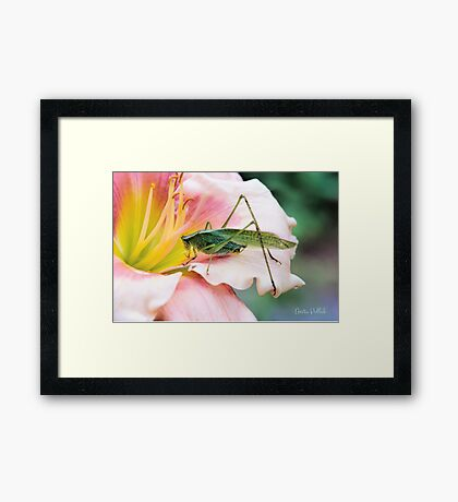I Wonder What's Down There! Framed Print