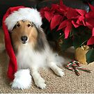 Merry Christmas Collie by Jan  Wall