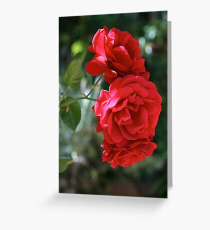 Sympathy Rose Greeting Card