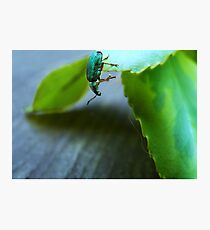 Curious Insect Photographic Print