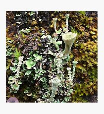 Lichen Photographic Print