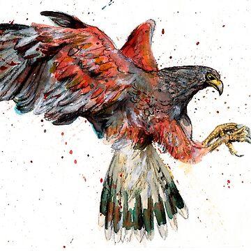 Harris Hawk by maddiesh