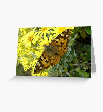 Butterfly: Painted Lady (Vanessa cardui)  Greeting Card
