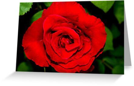 Star-shaped rose by ♥⊱ B. Randi Bailey