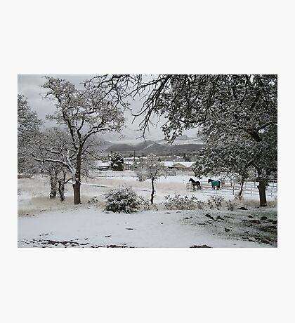 Covered with the Fluffy White Stuff Photographic Print