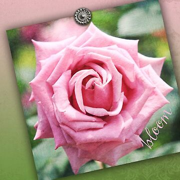 Hybrid Tea Rose Pink Vintage Texture Ornamental Pattern by beverlyclaire