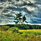 Lonely Pine Tree by Johnny Furlotte