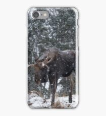 Moose in a snow snow storm iPhone Case/Skin
