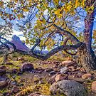 Cottonwood in Moab by Robert H Carney