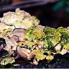Fungus by iheartdenver