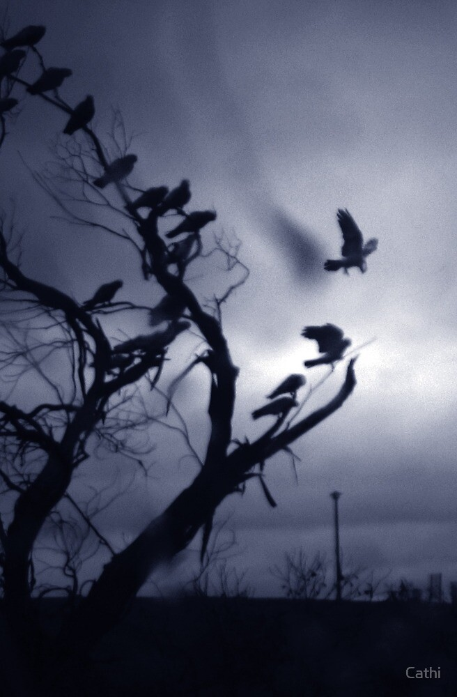The Birds by Cathi Norman