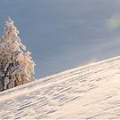 White tree by Marcel Ilie