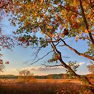 A Tree's View of Autumn on the Marsh by Owed To Nature