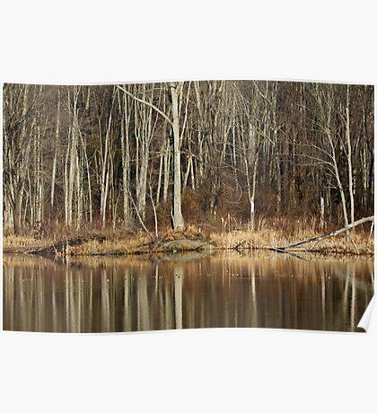 Across Skymount Pond - Autumn Browns Poster