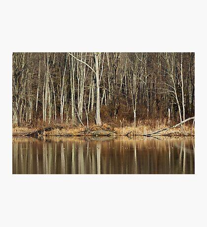 Across Skymount Pond - Autumn Browns Photographic Print