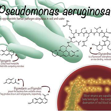 Pseudomonas aeruginosa by thevexedmuddler