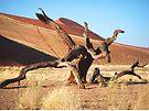 Dead tree Sossusvlei, Namibia, Africa by Margaret  Hyde
