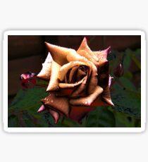 Copper Rose Sticker