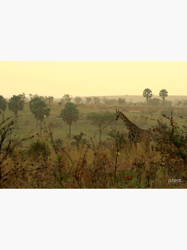 Am frühen Morgen Giraffe von jstem