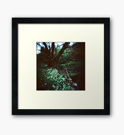 Enchanted Framed Print