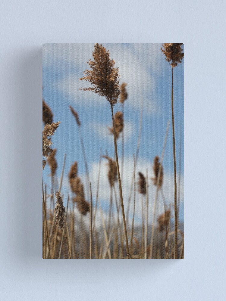 Alternate view of Golden sky Canvas Print