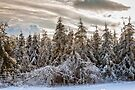 Winter Wonderland by PhotosByHealy