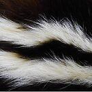 Its A Skunk! by WildestArt
