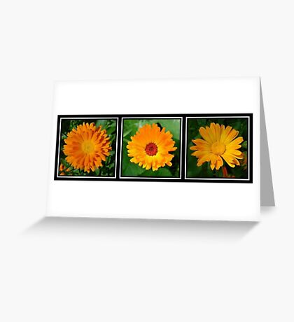 Orange Marigold Triptych Greeting Card