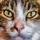 Long Haired Tabby Cat Close Up Portrait by taiche