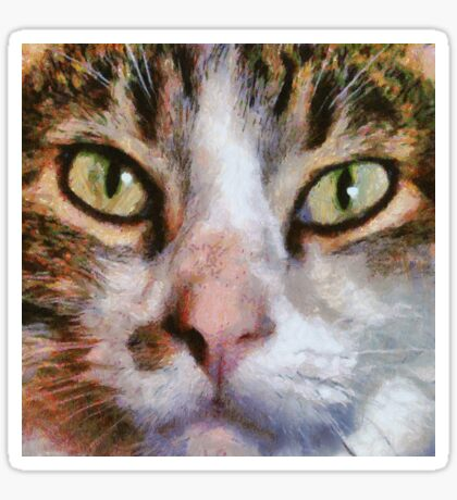Long Haired Tabby Cat Close Up Portrait Sticker