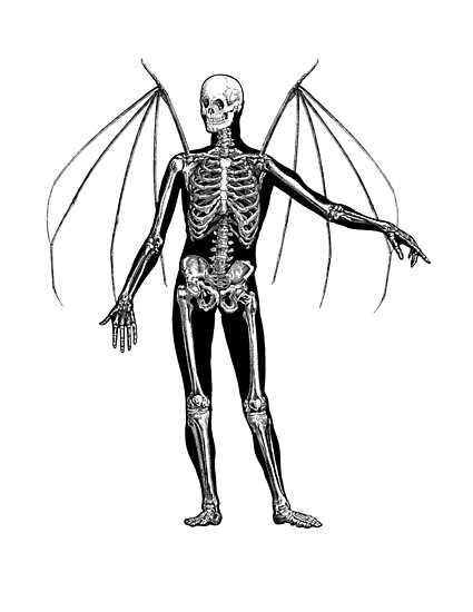 Man Bat Skeleton\