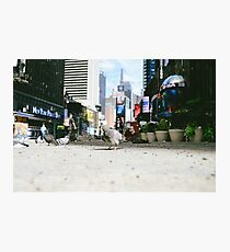 City Birds Photographic Print