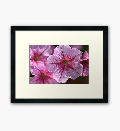 Happy in Pink Framed Print
