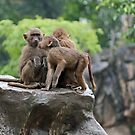 Primates by Leanne Allen