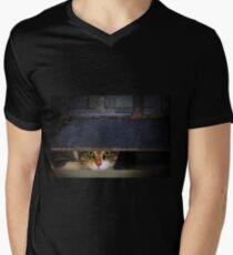Curious Looks of Calico Cat Mens V-Neck T-Shirt