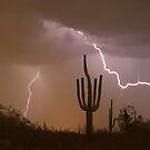 Sonoran Saguaro Southwest Desert Lightning Strike  by Bo Insogna