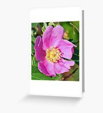 ALASKAN WILD ROSE Greeting Card