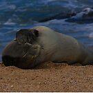 Help Save the Monk Seals by Shari Galiardi