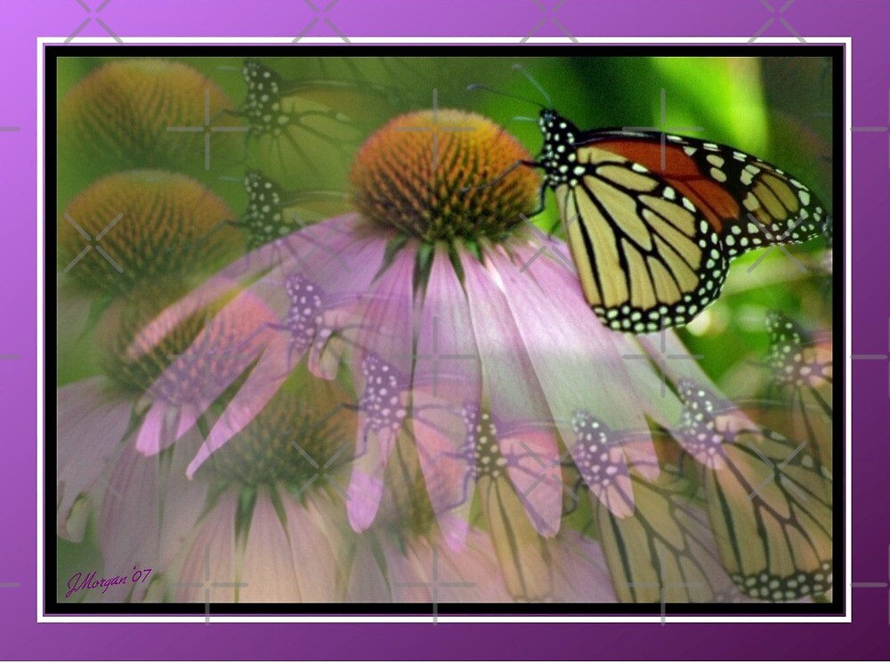 Multivision by Julie's Camera Creations <><