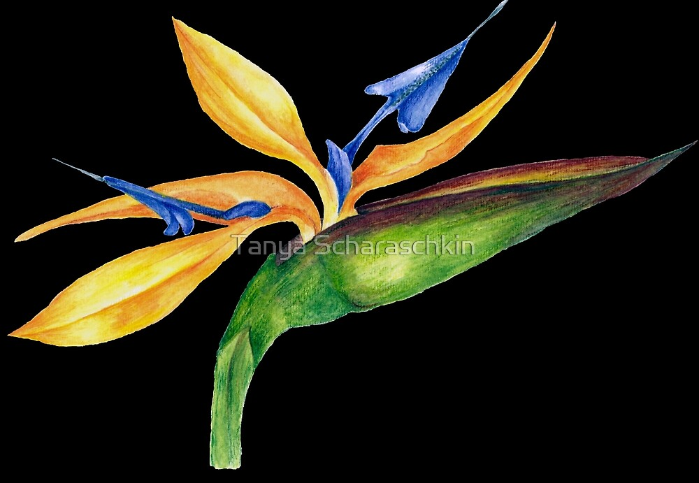 Bird of Paradise-3 by CraftyTiger