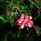 Pink and Lemon Grevillea by Lozzar Flowers & Art