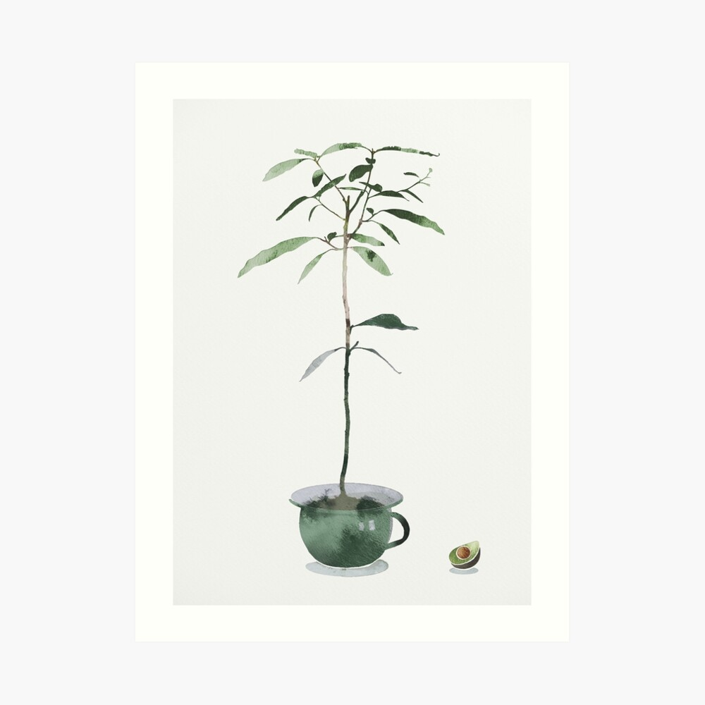 Avocado Tree Art Print