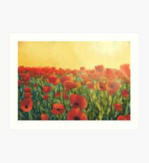 Sunlit poppy field Art Print