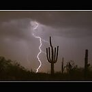 Southwest Saguaro Cactus Desert Storm Panorama by Bo Insogna