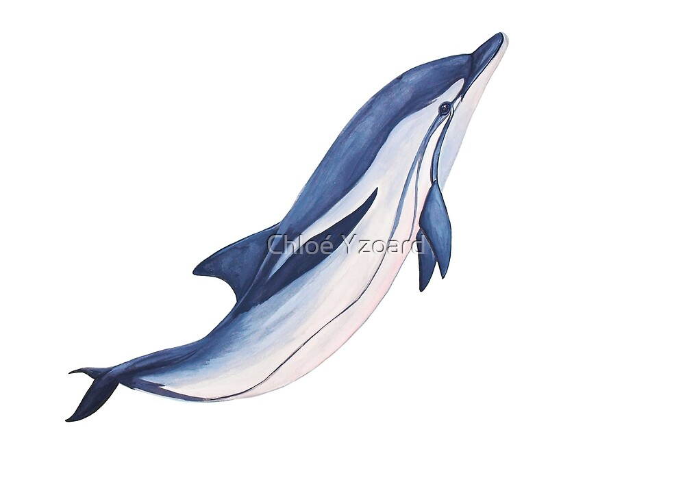 """Striped dolphin "" by Chloé Yzoard 
