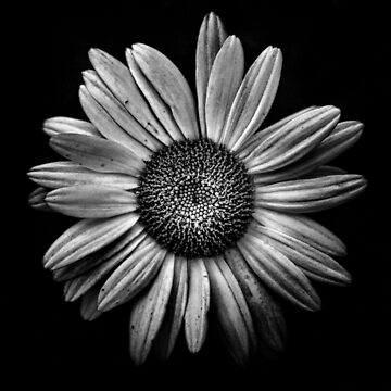 Backyard Flowers In Black And White 13 by learningcurveca