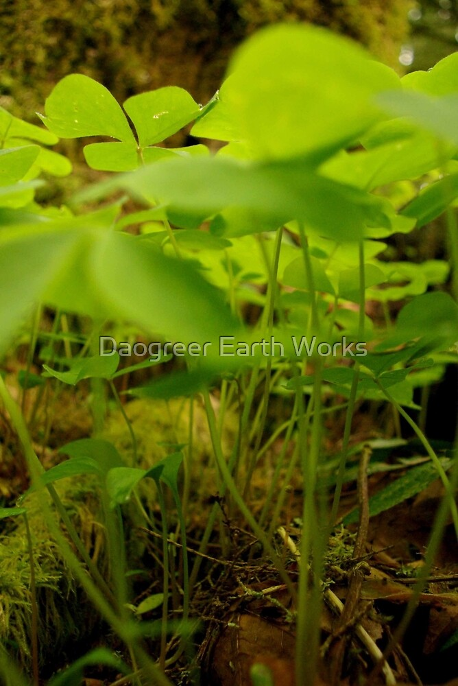 Forest Floor by Daogreer Earth Works